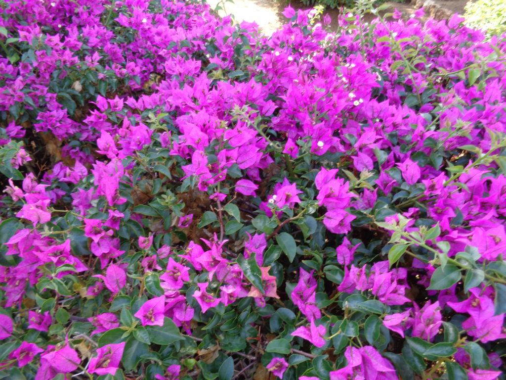 canarabi.com flore entrada hotel rural
