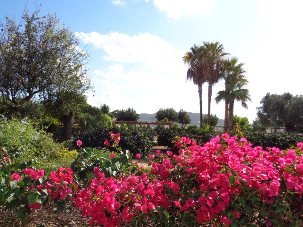 canarabi.com jardines hotel