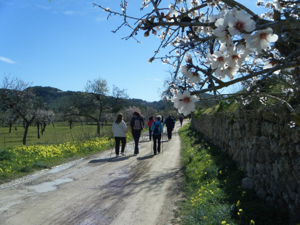 canarabi.com nordic walk in ibiza